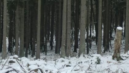 Hirschrudel im Wald