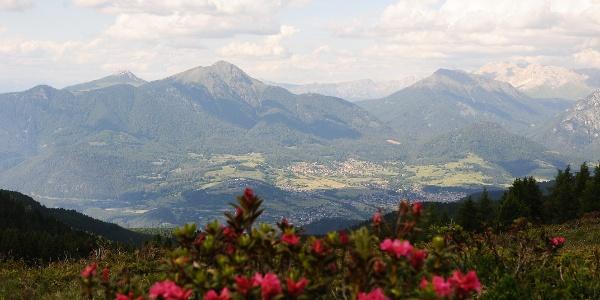 Rododendri e vista sulla Val di Fiemme