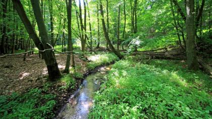 Durch grüne Wälder führt die Wanderung durch die Kühlung