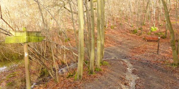 Endpunkt am Anschluss zum Soonwaldsteig im Wald