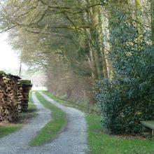 Viel Holz vor der Hütte