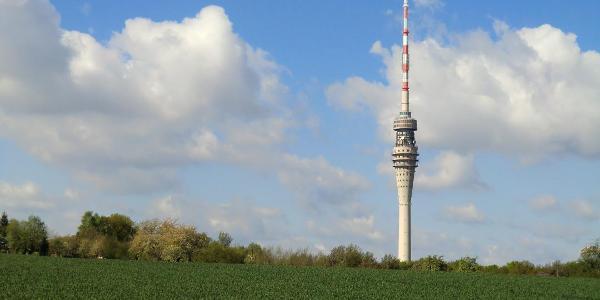 Blick über die Felder zum Dresdner Fernsehturm