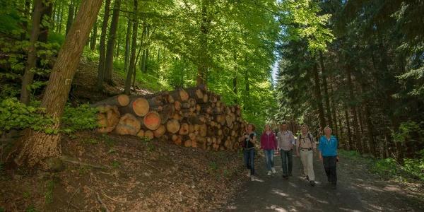Wandern auf waldreichen Wegen oberhalb von Oberkirchen