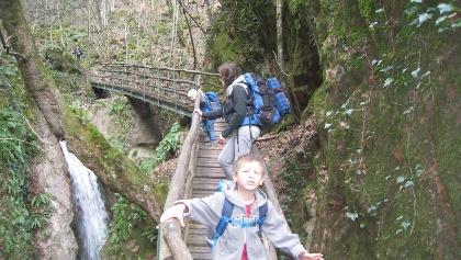 Fast wie im Dschungelfilm wandern wir auf urigen Holzbrücken durch die mit Moosen und Efeu bewachsene Klamm