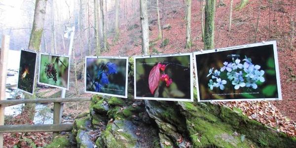 Klause, Fotoausstellung