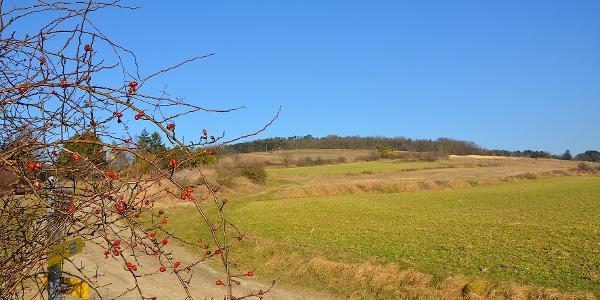 Weingärten Tullnerfeld