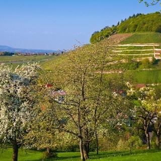 Frühling am Castellberg