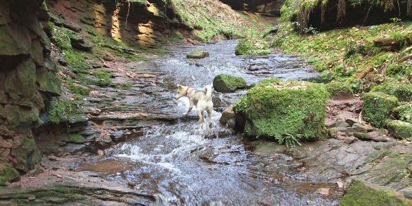 Xanderklinge - ascent through the water