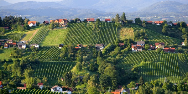 Blick auf die Weinberge des Schilcherlandes
