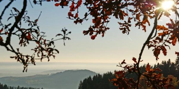 Ausblick zum Bogenberg