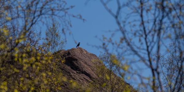 Der Monte Schlacko