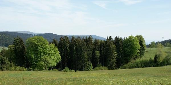 Aussicht von Maibrunn zu Hirschenstein und Schopf vom Weg nach Klinglbach