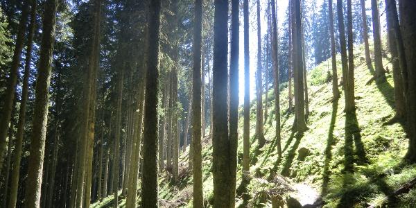 Schattige Waldwege spenden Abkühlung an heißen Sommertagen