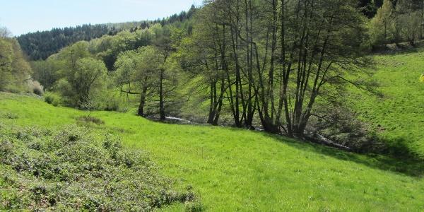 Bachaue Eifel