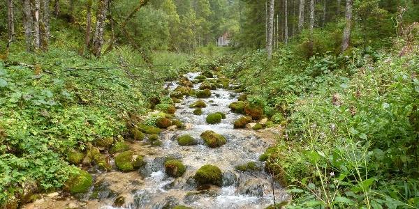 Gebirgsbach in der Siebenseerunde