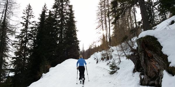 Weg vom Parkplatz Richtung Sichelwand
