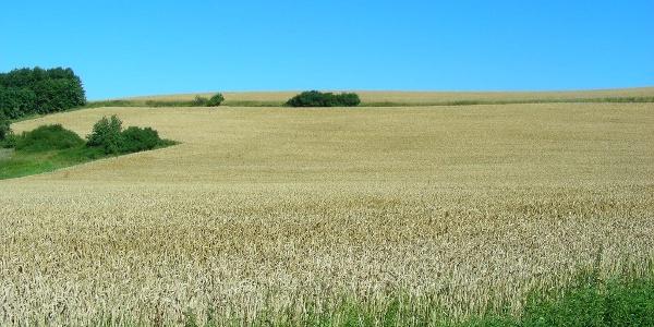 Weite Felder prägen die Höhenzüge des Nordpfälzer Berglandes.