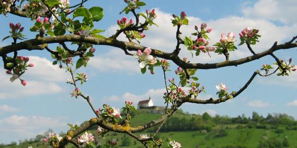 Die Wurmlinger Kapelle zur Apfelblüte