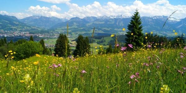 Blumen- und Käuterwiesen oberhalb Hüttenberg mit traumhafter Aussicht