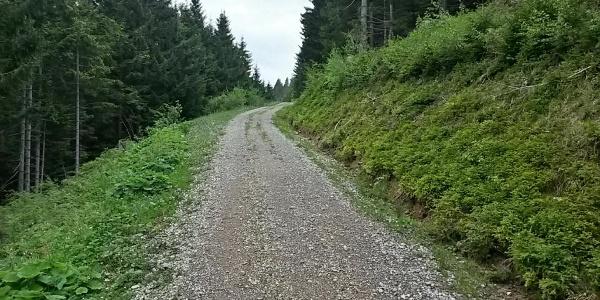 Forstweg im Aufstieg zum Hauchenberg