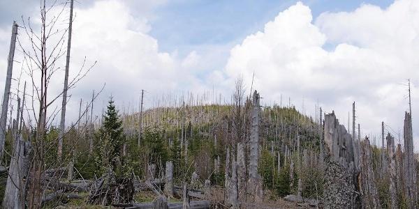 Siebensteinkopf am Beginn des Aufstiegs