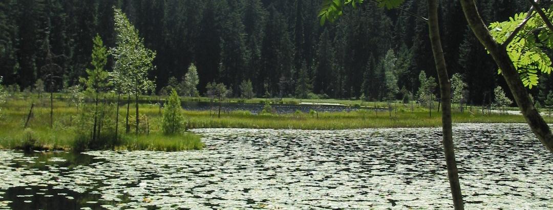Huzenbachersee