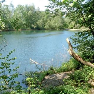 Alter Rhein zwischen Schmitterbrücke und Wiesenrain