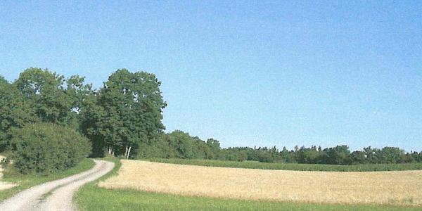 Feldweg auf dem Indlekofer Feld