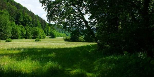 Idyllische Wiesen im Schwarzbachtal