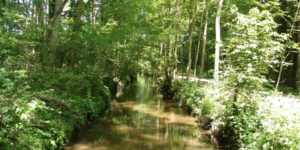 Spiegelbach in der Nähe der Knittelsheimer Mühle