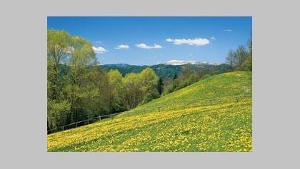 Ausblicke im Frühjahr am Alpl