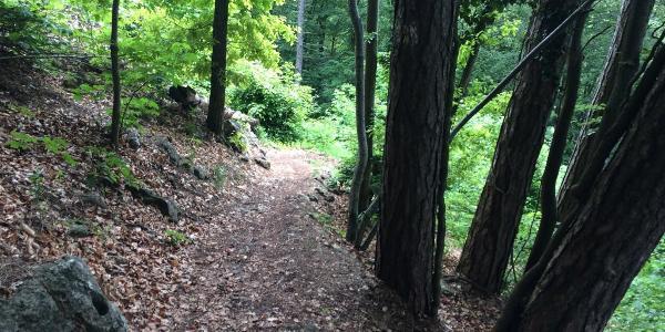 Trail Einstieg