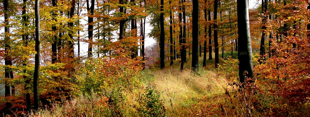 Autumn in the Teutoburg Forest