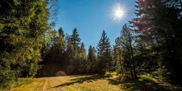 Über Wiesen und durch Wälder im Chiemsee-Alpenland