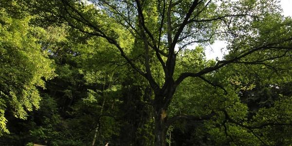 Arboretum Bad Driburg