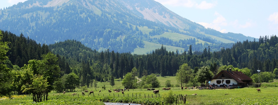 Kalbelehof Alpe