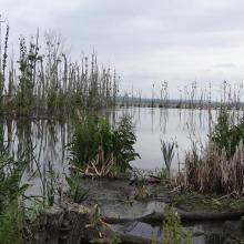 Polderwiesen der Peene