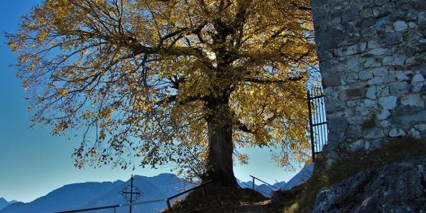 Burgruine Falkenstein im Herbst
