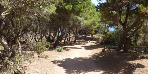 Waldweg kurz vor dem Pferdeweg.