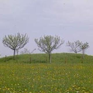 Fürstengrab von Thomm