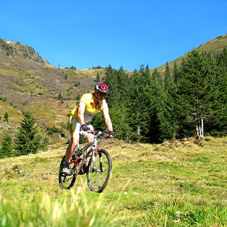 Biken Donnersbachwald