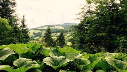 Blick auf den Erlsberg