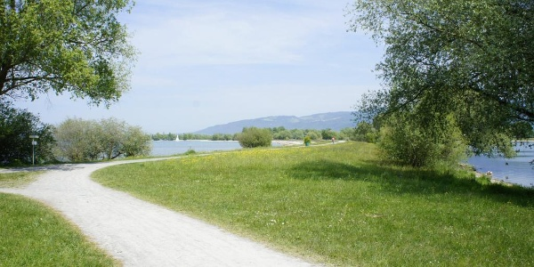 Grüner Damm