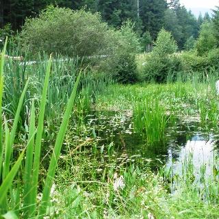 Biotop Mariensee