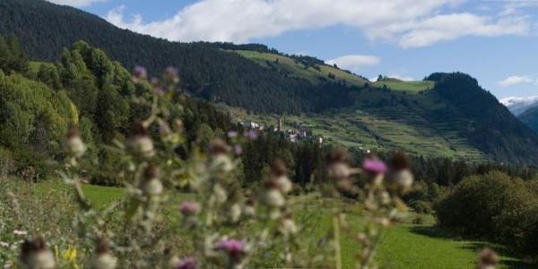 Die terrassierten Hänge östlich von Ramosch