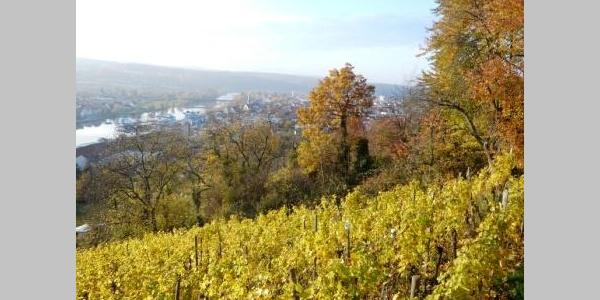 Blick vom Rotwein Wanderweg ins Maintal bei Erlenbach