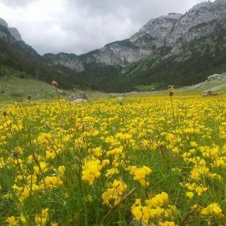 Yellow lake :)