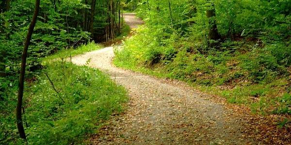 Waldweg zw. Unter- und Oberhegerberger
