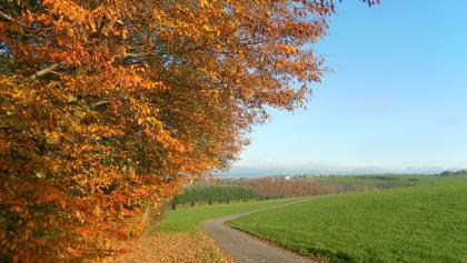 Blick auf Longkamp im Mosel-Hunsrück