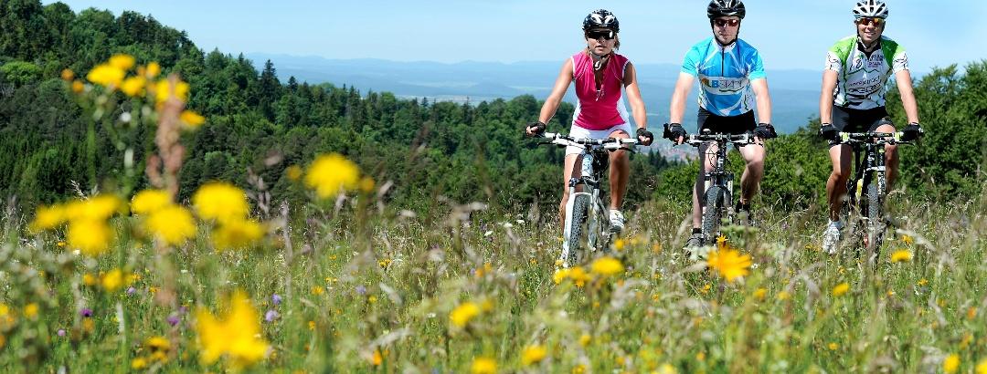 Fahrt über sommerliche Blumenwiesen